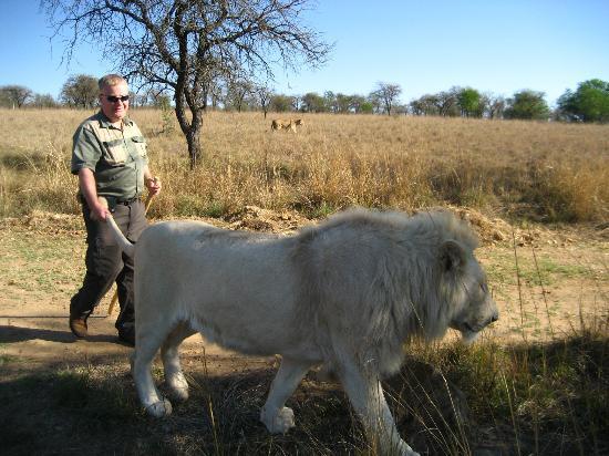 Polokwane, Sydafrika: Lion Walk