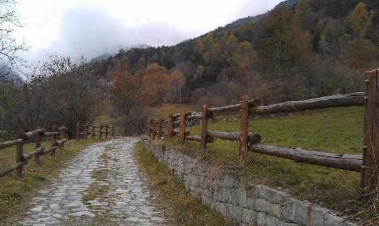 Natural Park Mont Avic: Uno scorcio della foresta, coi colori dell'autunno