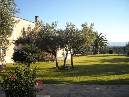 Agriturismo Le Carolee: een deel van de olijvenboomgaard