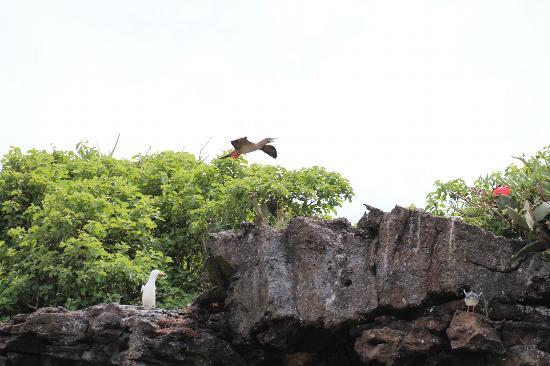 Genovesa, Ekvador: Bird Island