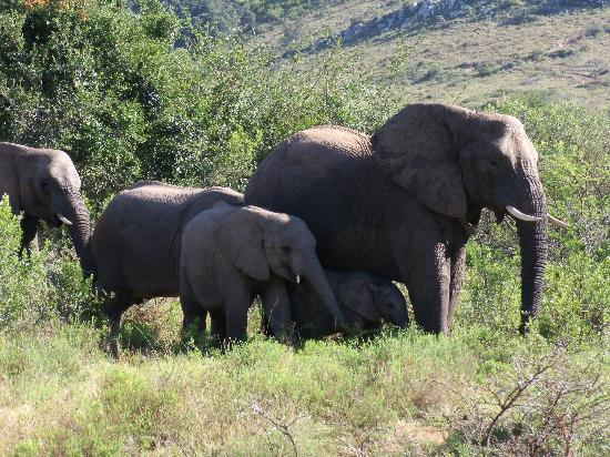 Pumba Private Game Reserve: Elephant family group