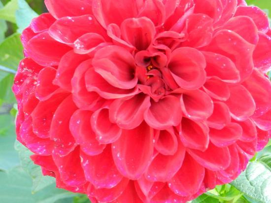 Mendocino Coast Botanical Gardens: Deep rose pink