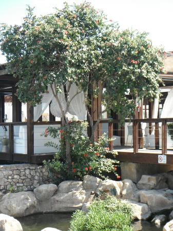 Capo Bay Hotel: Koi bar