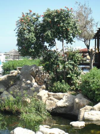 Capo Bay Hotel: Koi ponds