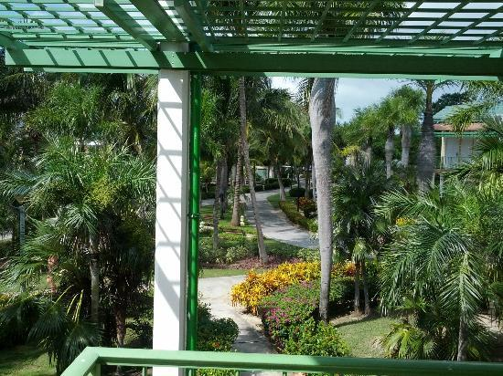 Melia Cayo Coco: View from our front door