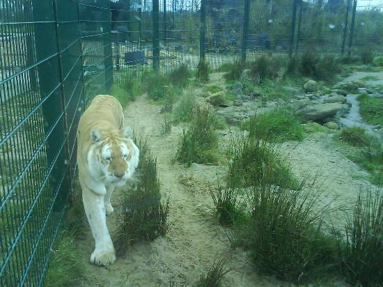 Isle of Wight Zoo 사진