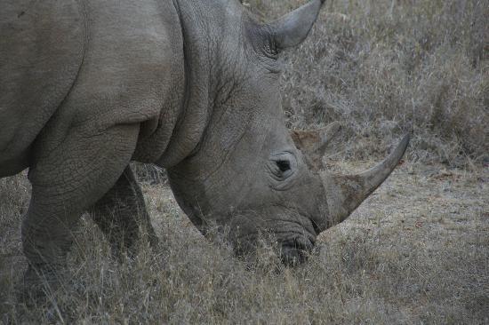 Pondoro Game Lodge: Pondoro Lodge Rhino