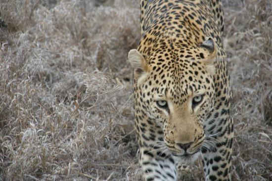 Pondoro Game Lodge: Pondoro Lodge Leopard