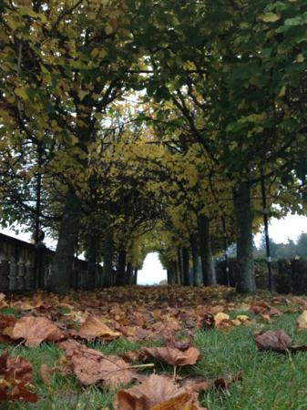 Rhinefield House Hotel: autumn in the grounds