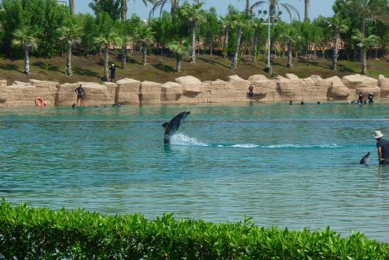 Dolphin Bay: Dauphin