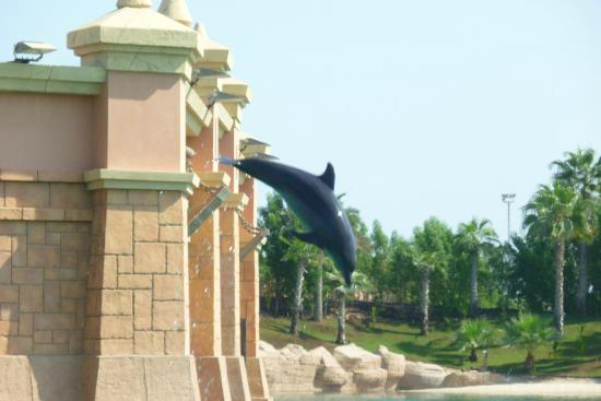 Dolphin Bay: Le saut du dauphin