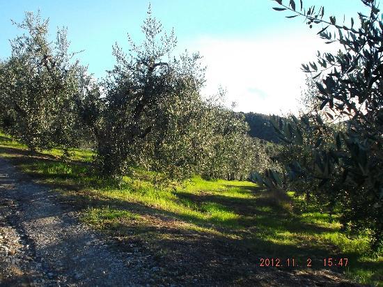 Borgo Cenaioli B/B Locanda & Residence di Campagna: la campagna