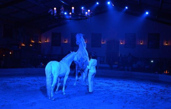 Theatre Equestre Camarkas : Chevaux Camargue