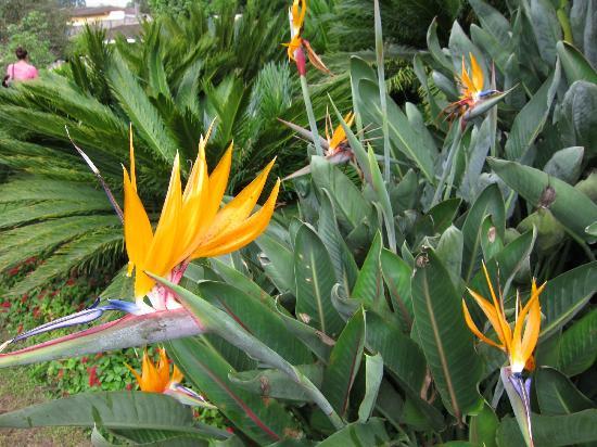 Quinta de las Flores : Tropical flowers on the hotel grounds