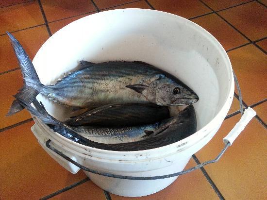 Le Raganelle : Appena pescato dal proprietario!