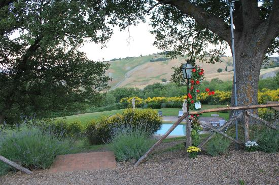 Agriturismo Le Macchie : A view from the olive grove