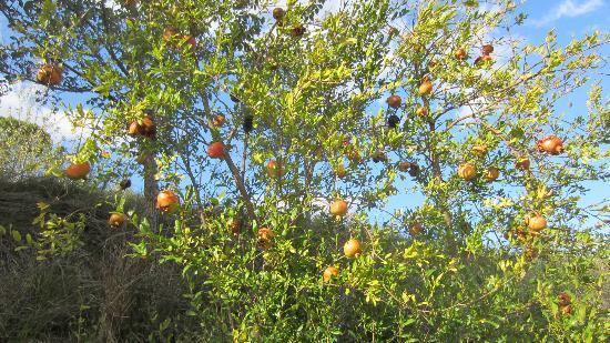 La Serena: Pomegranites