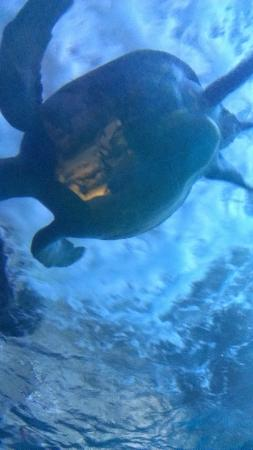 Downtown Aquarium: Yep, Turtle