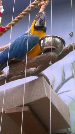 Downtown Aquarium: Macaw