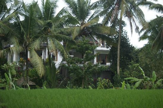 Villa Sancita: la villa vue de la rizière