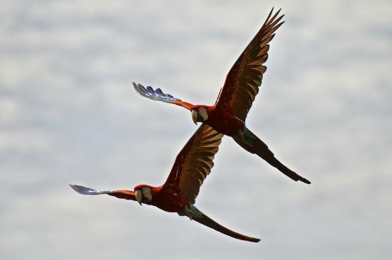 Buraco das Araras Ecoturismo: Flying couple