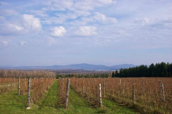 view of vineyard and distant mountains at Domaine Les Bromes