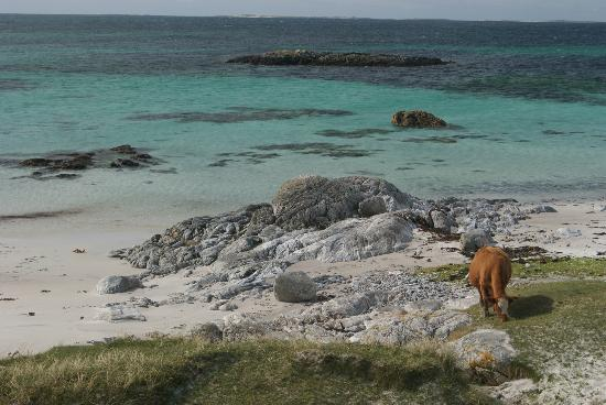Bagh Alluin: Baile Raghnill, North Uist Nature Reserve