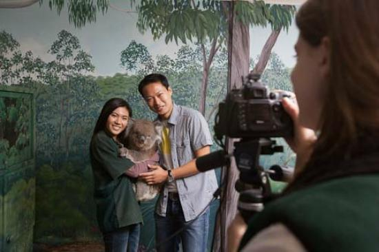 Crafers, Australia: Cleland Wildlife Park is one of the few places in Australia where you can hold a koala!