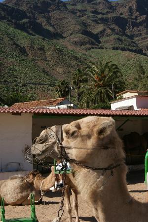 Camel Park Arteara : A pleasant day