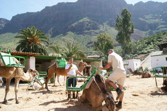 Camel Park Arteara: Our camels