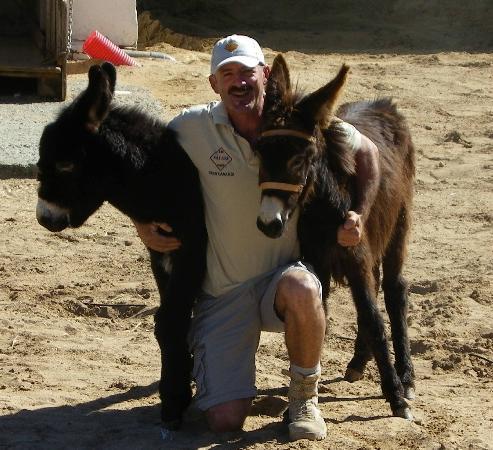 Camel Park Arteara: Our donkeys