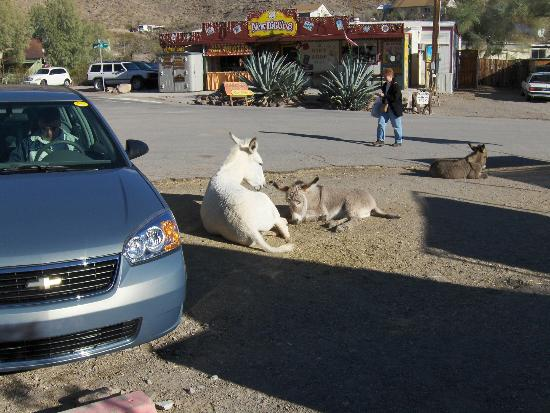 Avi Resort & Casino: Oatman