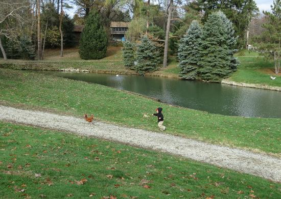 Country Road Bed and Breakfast: Fishing Pond and Chickens