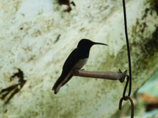 Cabanas Armonia y Jardin de Orquideas: Beija flores no café da manhã