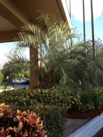 Hampton Inn Orlando International Airport: Front Entrance Palm
