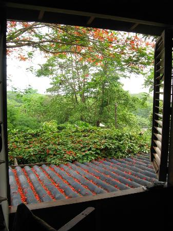 Casa Colina: Looking out of the upstairs bedroom window.