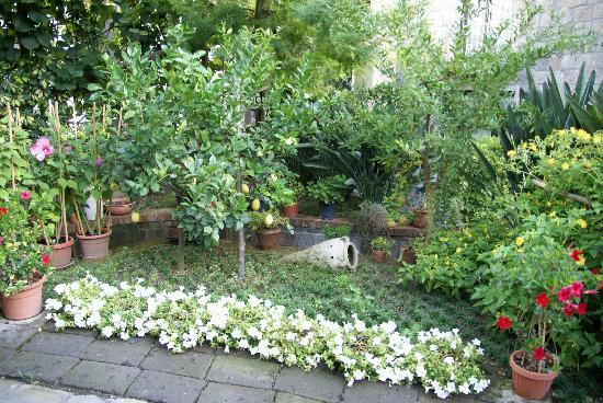 Relais Villa Angiolina: The garden