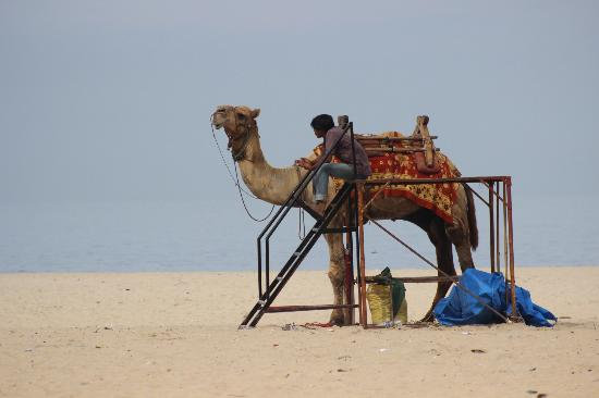 Raheem Residency: Camel ride