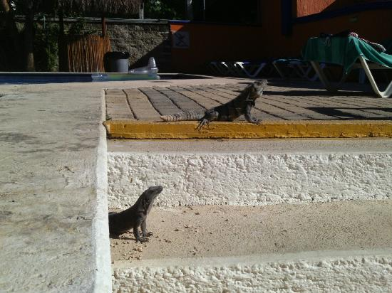 Real Playa del Carmen: These two little guys came out a few times a day