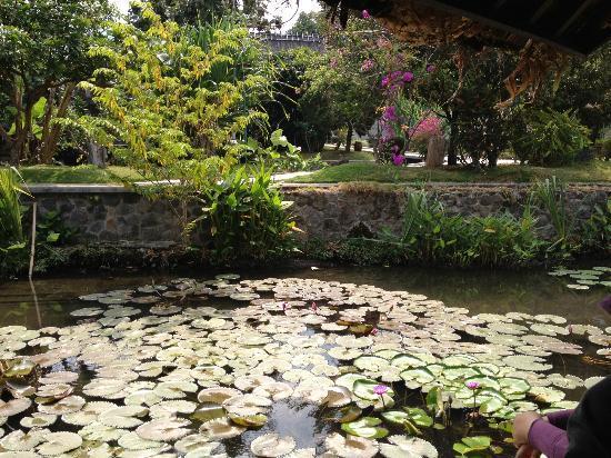 Kampung Sumber Alam: surrounding area