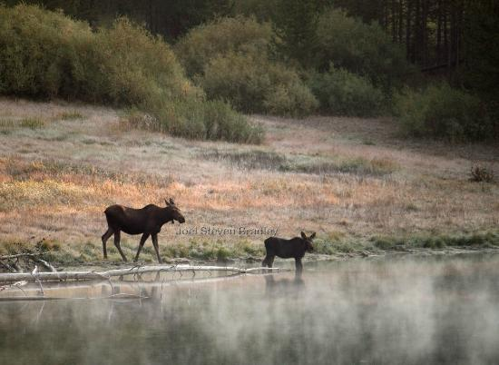 Lake Condominiums: Two moose provided lakeside entertainment most mornings.  This picture was taken from our balcon