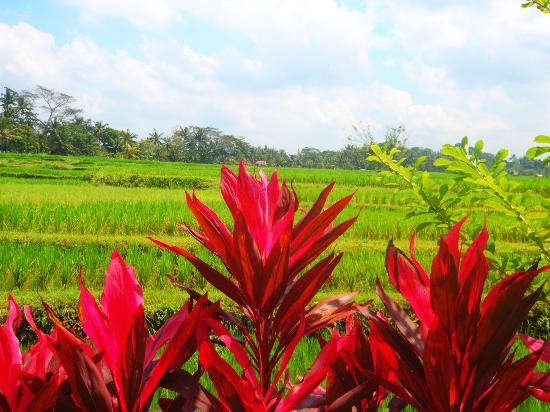The Ubud Village Resort & Spa: View at Breakfast