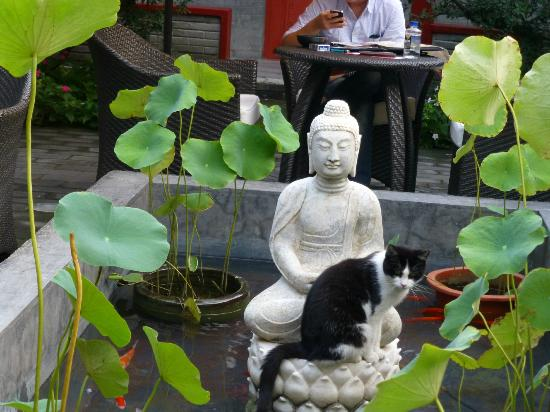 Hotel Cote Cour Beijing: One of the 4 resident Hutong cats