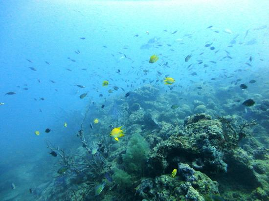Havelock Island, Inde : Lots of fishes to see