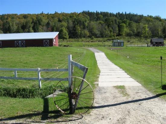 Adams Family Farm: Peaceful farm scene