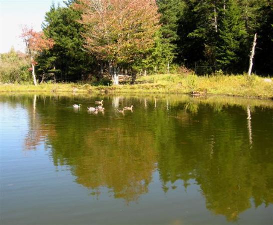 Adams Family Farm: Serene pond