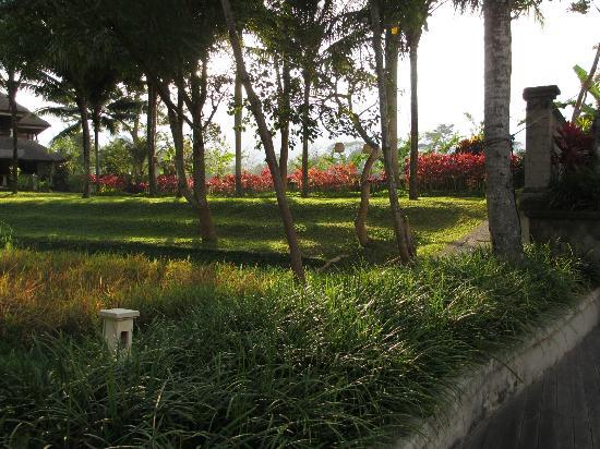 The Ubud Village Resort & Spa: The extensive gardens of the resort