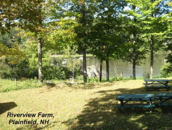Riverview Farm: Shady picnic area by the river