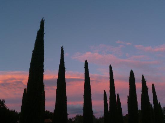 Hotel Casolare le Terre Rosse: il viale alberato al tramonto!