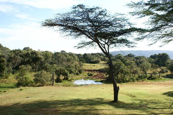 Mara Bush Houses, Asilia Africa: Wasserloch